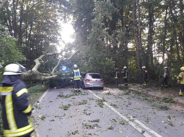 FW-KLE: Baum stürzt auf fahrendes Auto